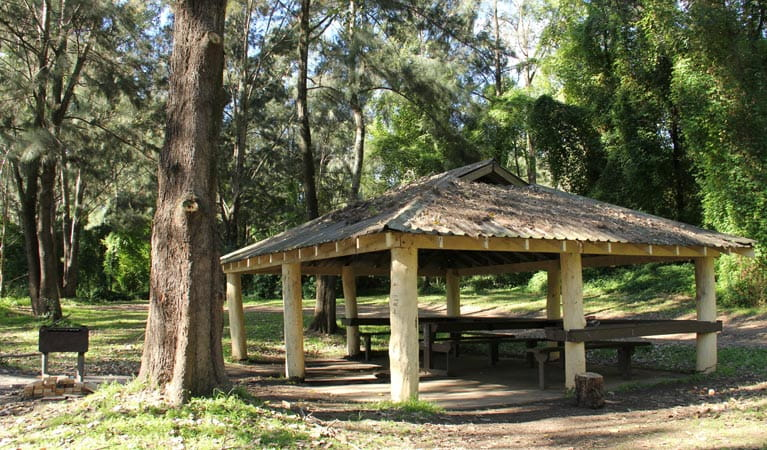 Picnic area at Cattai campground. Photo: John Yurasek