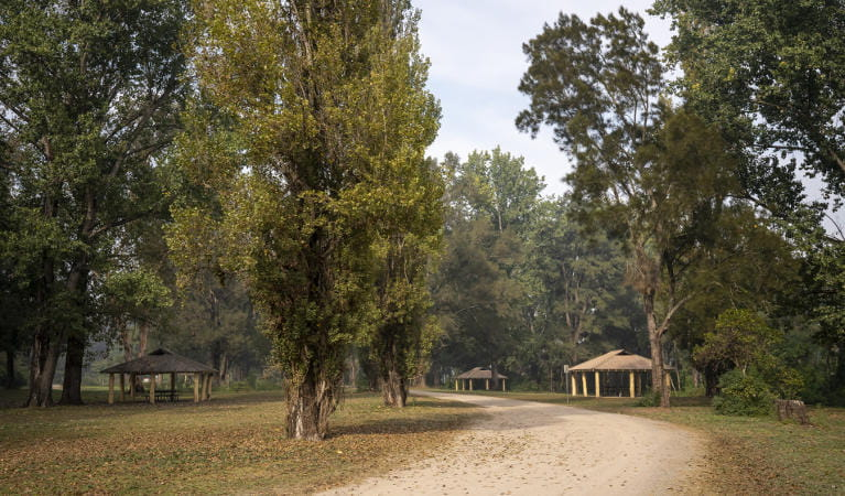 A dirt road travelling through Cattai Farm picnic area, flanked by tall trees with picnic sheds in the distance. Photo: John Spencer/OEH