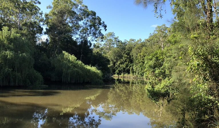 Cattai Creek, Mitchell Park picnic area, Cattai National Park. Photo: Cameron Wade/the photographer