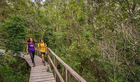 A man and woman walk along raised boardwalk on Rainforest walking track, Cattai National Park.  Photo: John Spencer/OEH.