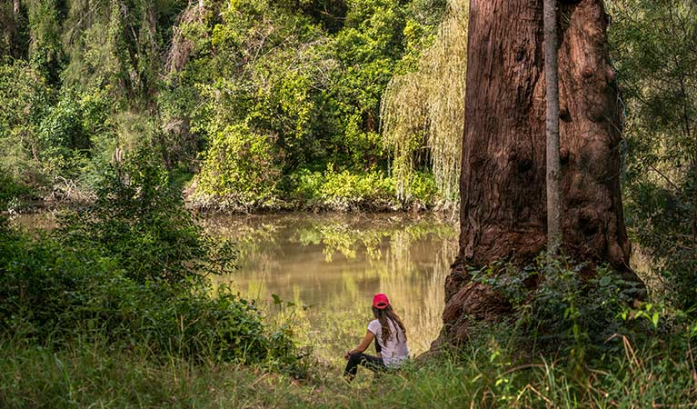 A woman sits by a rough barked apple tree beside Cattai Creek, Cattai National Park.  Photo: John Spencer/OEH.