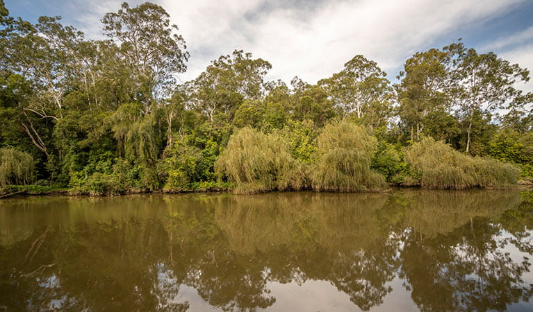 View of Cattai Creek surrounded by bushland, Cattai National Park.  Photo: John Spencer/OEH.