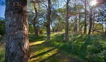 Wingecarribee River walk, Cecil Hoskins Nature Reserve. Photo: Nick Cubbin
