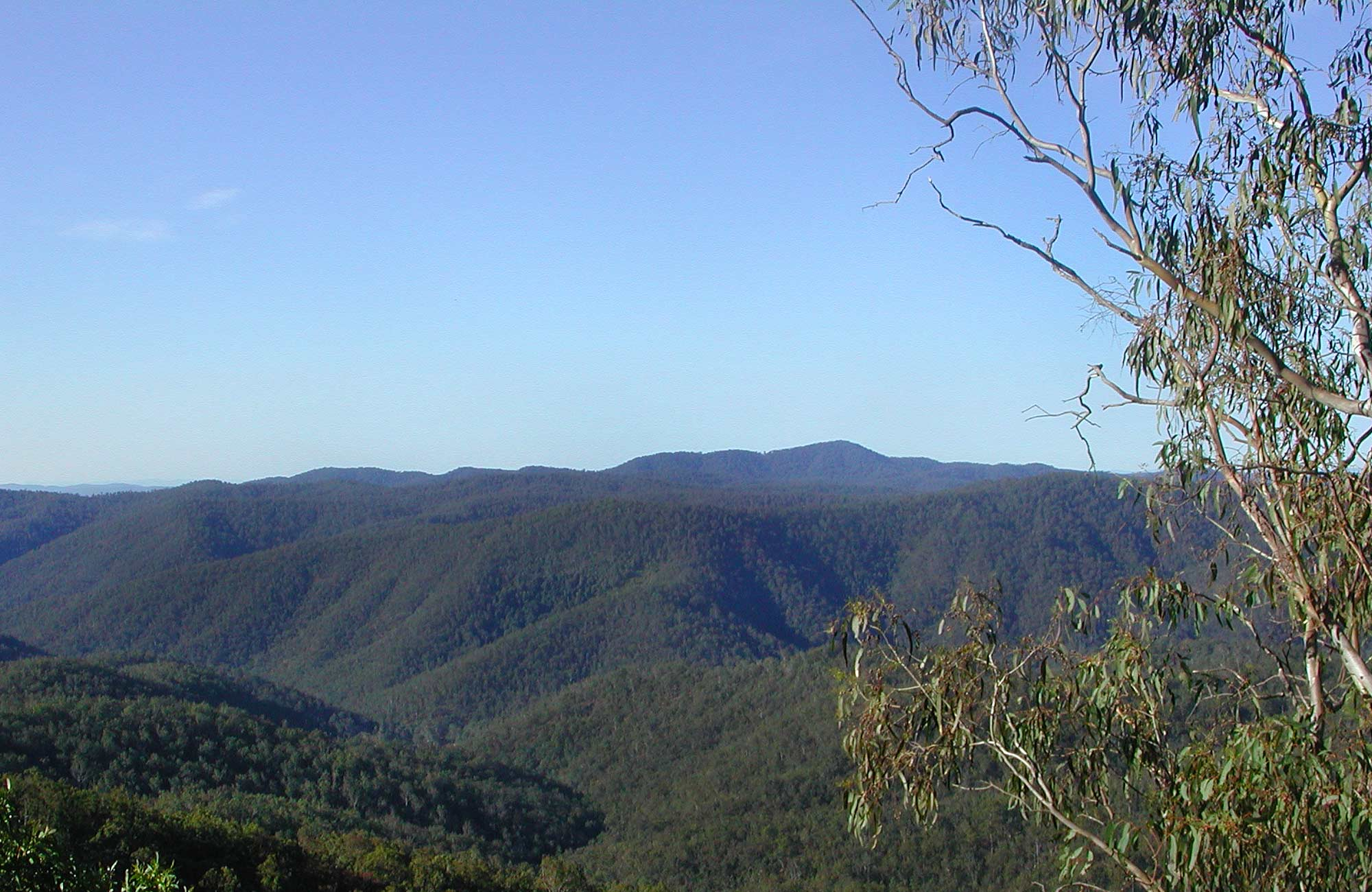 Chaelundi National Park. Photo: A Harber/NSW Government