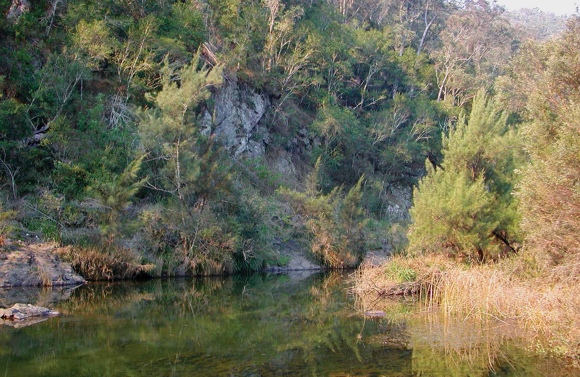 Chandlers Creek, Doone Gorge campground, Chaelundi National Park. Photo: A Harber/NSW Government