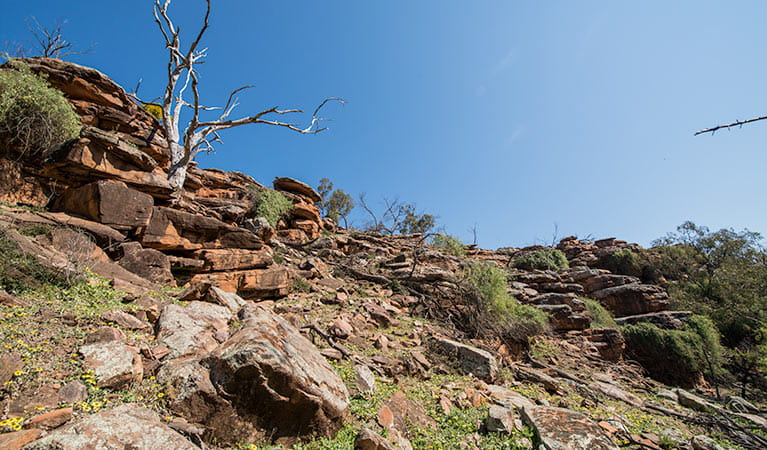 The rugged cliffs of the Cocoparra Range in Cocoparra National Park. Photo: John Spencer/DPIE