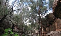Store Creek picnic area, Cocoparra National Park. Photo: M Ballestrin