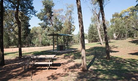 The Pines picnic area, Cocoparra National Park. Photo: John Spencer
