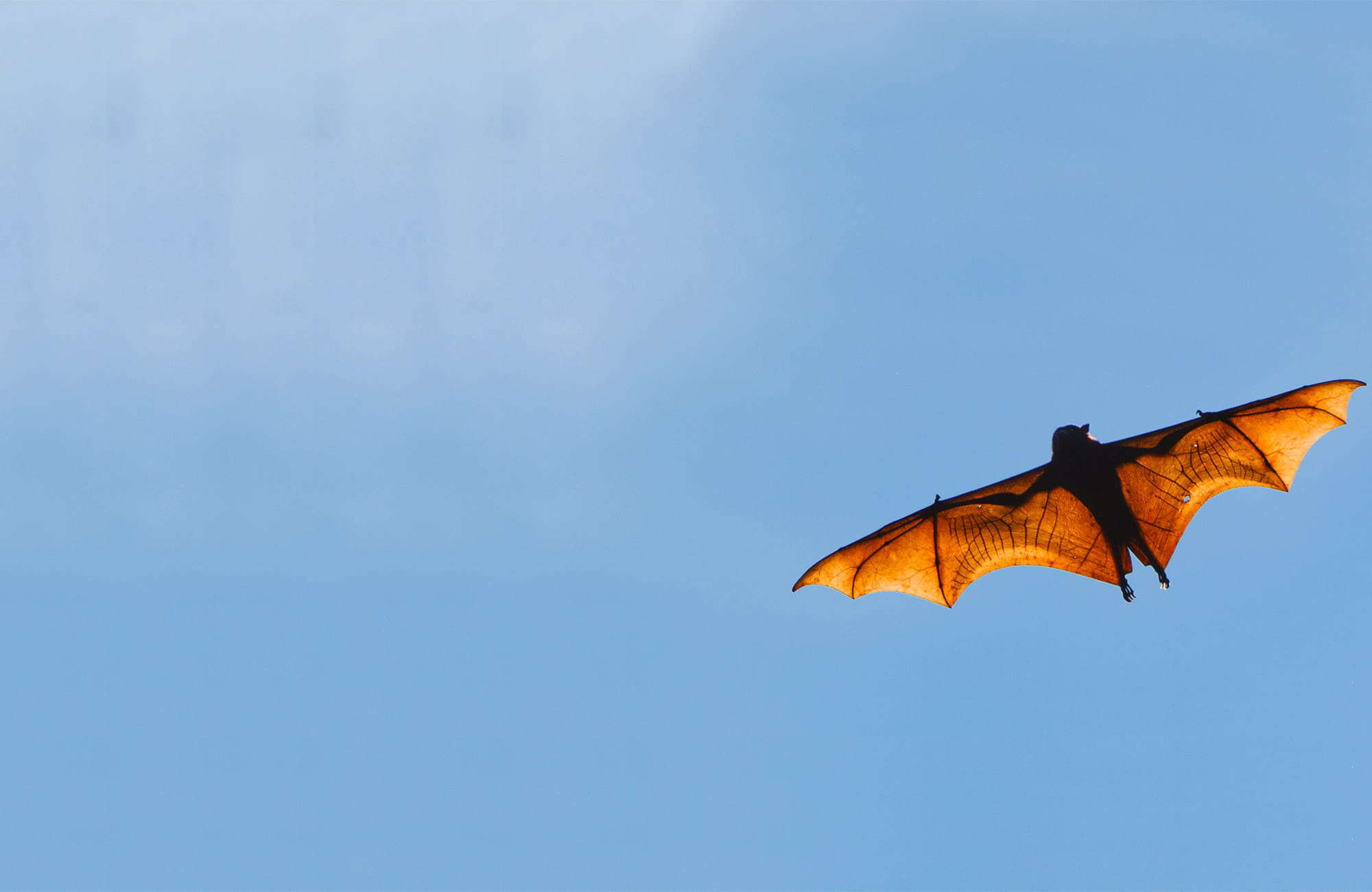 A bat. Photo: Rob Cleary