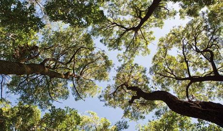 Tree tops, Campbells Beach, Coffs Coast Regional Park. Photo: Rob Cleary