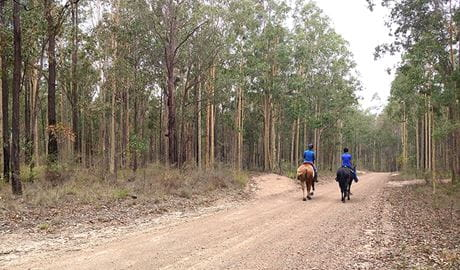 2 horse riders on Columbey horse riding trails surrounded by trees in Columbey National Park. Photo: Liam Banyer © DPIE