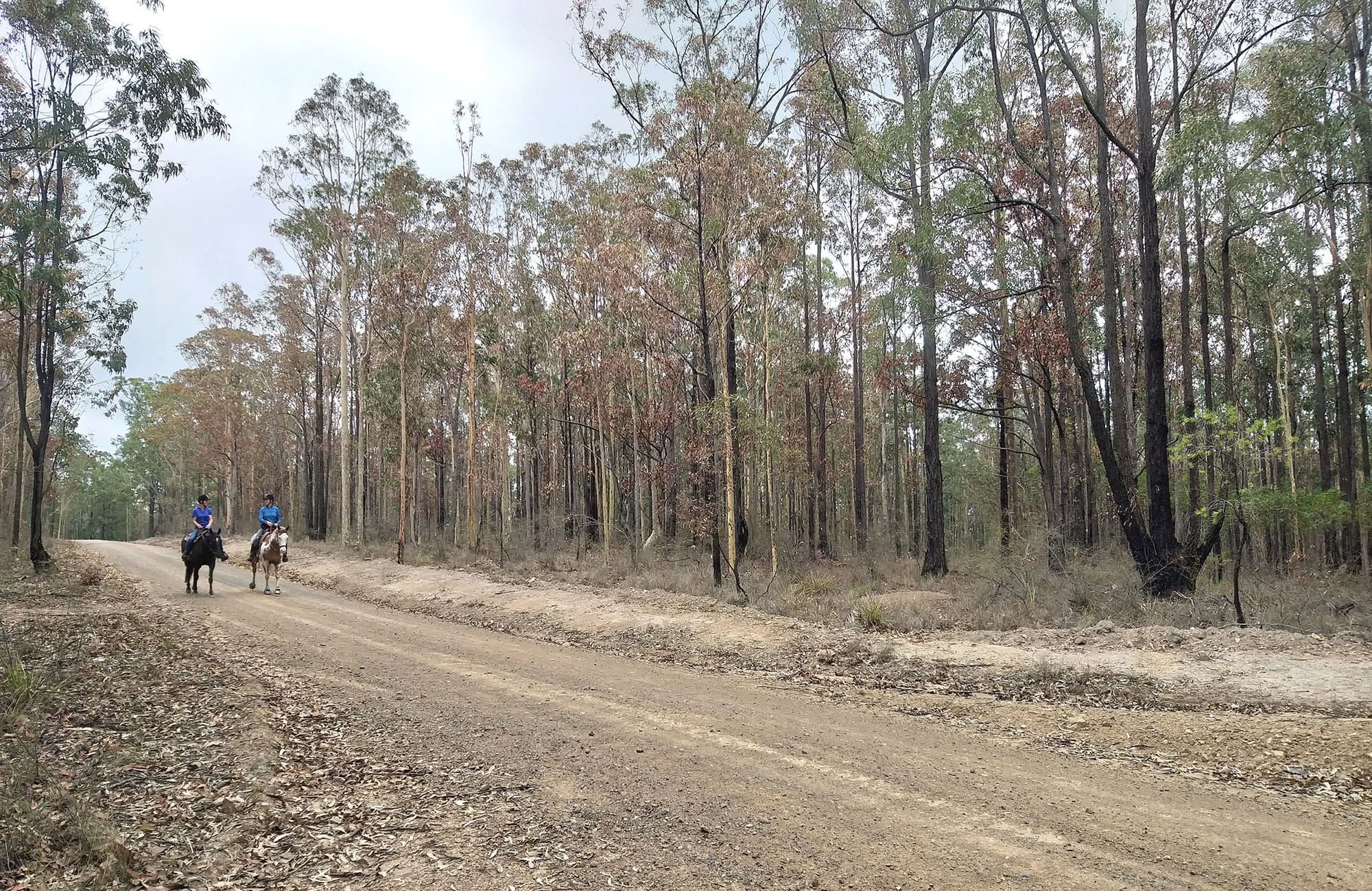 2 horse riders along Columbey horse riding trails in Columbey National Park. Photo: Liam Banyer © DPIE