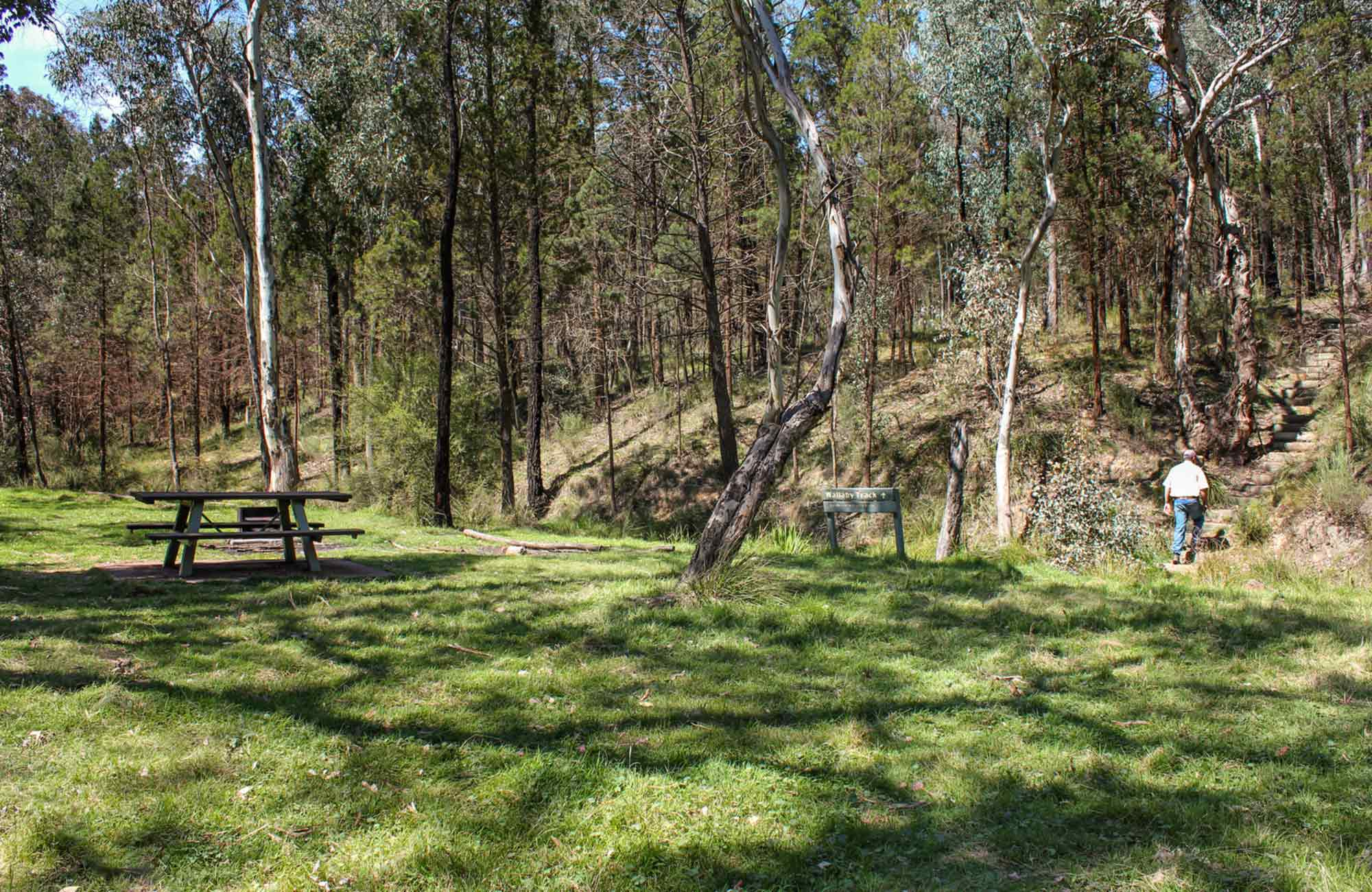 Wallaby Creek picnic area, Conimbla National Park. Photo: Claire Davis/NSW Government