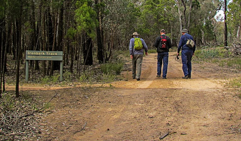Ironbark walking track, Conimbla National Park. Photo: M Cooper/NSW Government