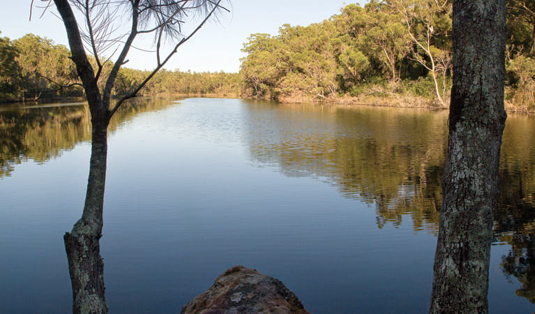 Creek reflection, Conjola National Park. Photo: Libby Shields