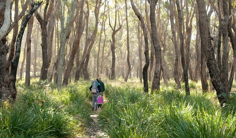 Woodland, Conjola National Park. Photo: Michael Jarman