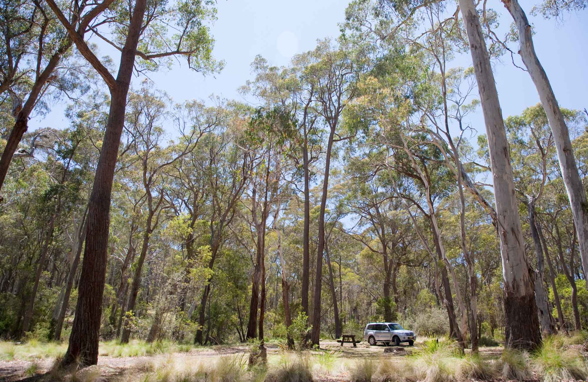 Coxs Creek campground, Coolah Tops National Park. Photo: Nick Cubbin/NSW Government