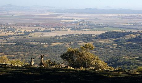 View past 2 wallabies on the escarpment edge to a patchwork of wide-open plains, hills and distant mountains.  Photo: Barry Collier © Barry Collier
