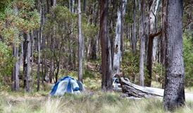 Coxs Creek campground, Coolah Tops National Park. Photo: Nick Cubbins/NSW Government