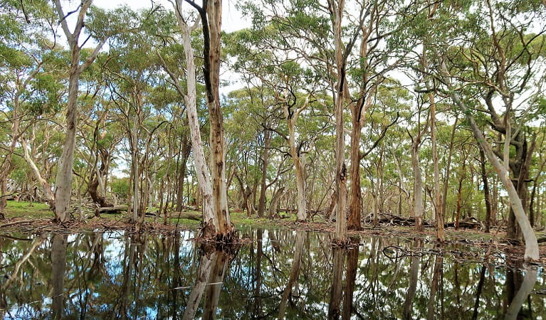 Gum trees in and surrounding a still pond in Coolah Tops National Park. Photo: Nicola Brookhouse © DPIE