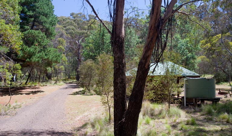 The Barracks campground, Coolah Tops National Park. Photo: Nick Cubbin/NSW Government
