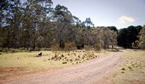 The Pines campground, Coolah Tops National Park. Photo: Nick Cubbin/NSW Government