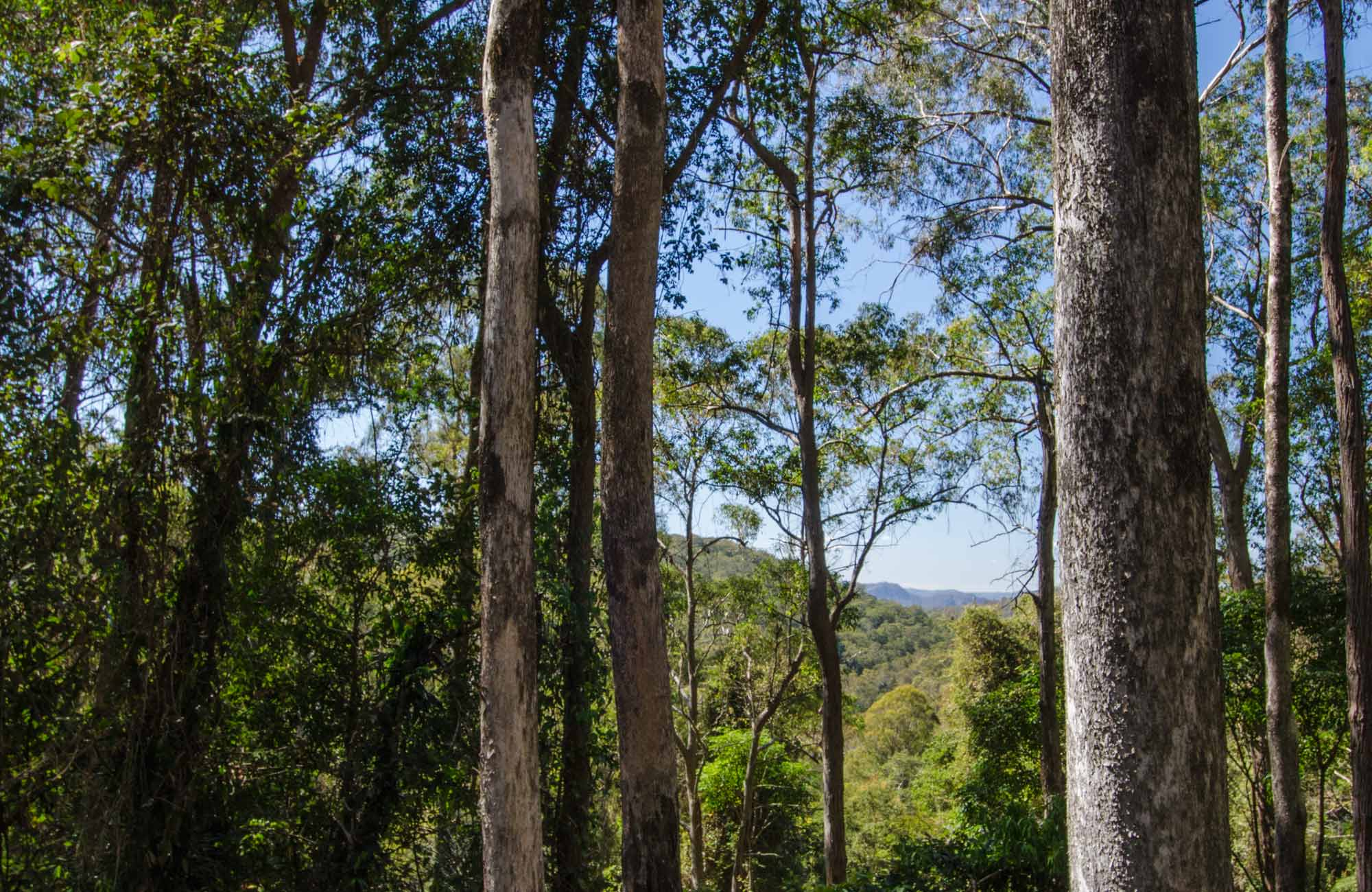 Basin Loop walking track, Copeland Tops State Conservation Area. Photo: John Spencer.