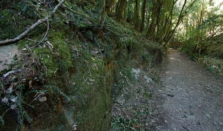 Hidden Treasure trail, Copeland Tops State Conservation Area. Photo: John Spencer.