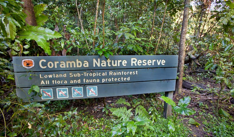 Coramba Nature Reserve. Photo: Rob Cleary