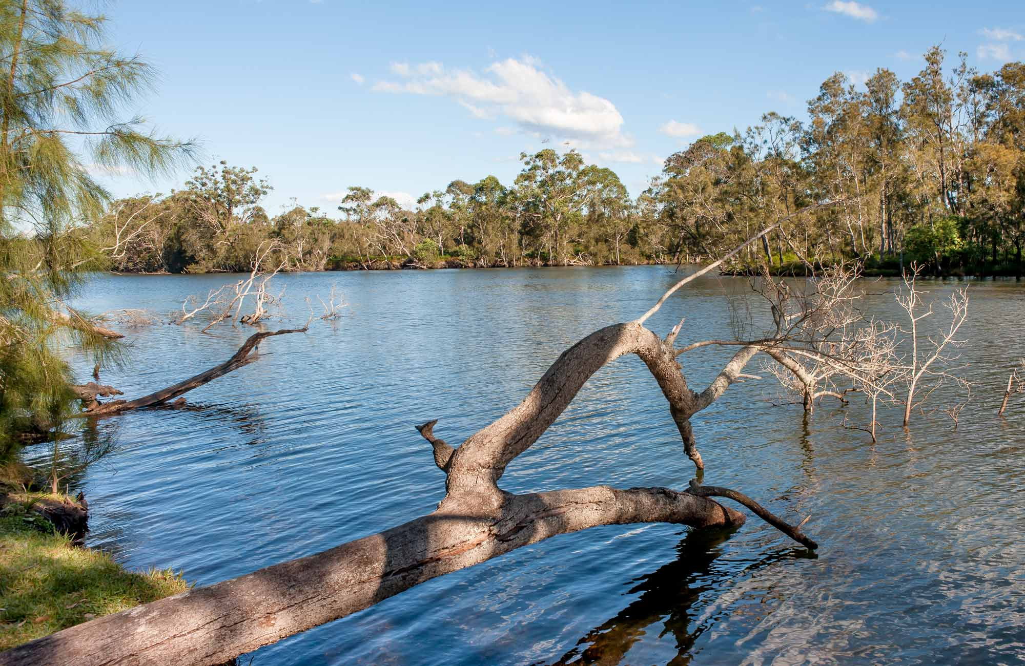 Wandandian Creek, Corramy Regional Park. Photo: Michael van Ewijk