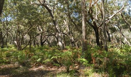 Blackbutt picnic area, Crowdy Bay National Park. Photo: Debby McGerty