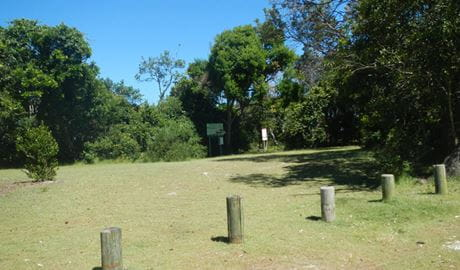 Cheesetree picnic area, Crowdy Bay National Park. Photo: Debby McGerty