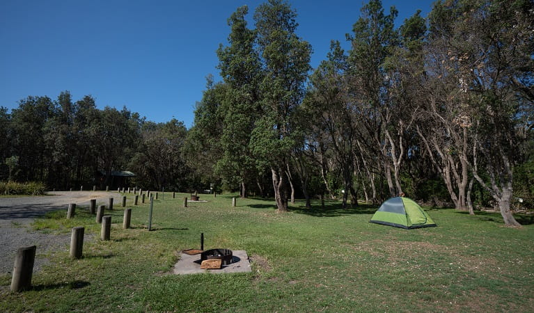 A pitched tent and fire ring on a campsite at Crowdy Gap campground, Crowdy Bay National Park. Photo: Rob Mulally/DPIE