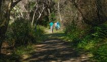 Crowdy Gap walking track, Crowdy Bay National Park. Photo: Debby McGerty/NSW Government