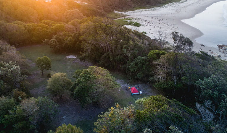 A tent pitched amongst trees, close to the beach in Diamond Head campground, Crowdy Bay National Park. Photo: Robert Mulally/DPIE