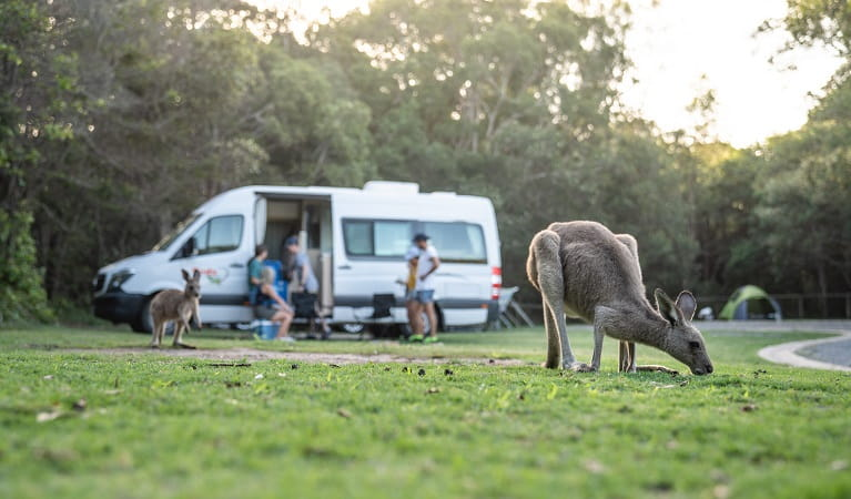 Kangaroos near a campervan in Diamond Head campground, Crowdy Bay National Park. Photo: Rob Mulally/DPIE