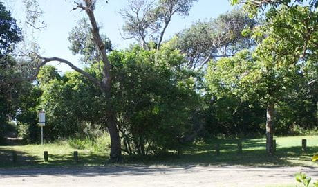 Geebung picnic area, Crowdy Bay National Park. Photo: Andy Marshall/NSW Government