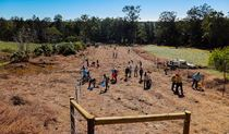 Friends of Cudgen planting, Cudgen Nature Reserve. Photo: NSW Government