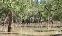 Nebine Creek, Culgoa National Park. Photo: NSW Government