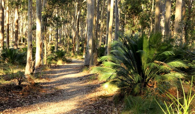 Wooded track, Cullendulla Creek Nature Reserve