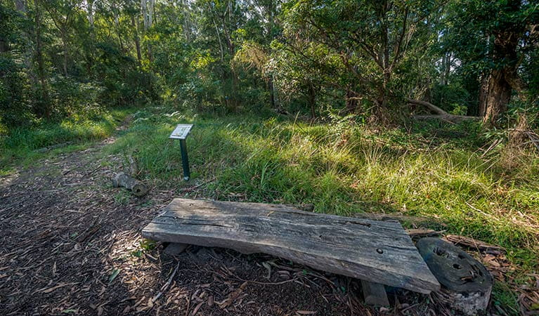 Browns Forest loop trail, Dalrymple-Hay Nature Reserve. Photo: John Spencer