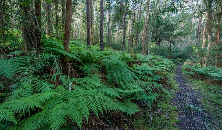 Lush rainforest, Dalrymple-Hay Nature Reserve. Photo: John Spencer