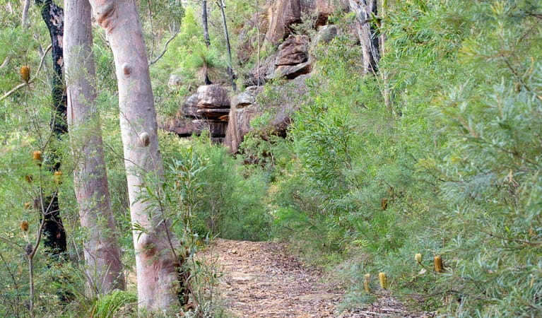 Jingga walking track, Dharawal National Park. Photo: Nick Cubbin