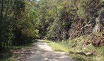 Devines Hill loop track, Dharug National Park.