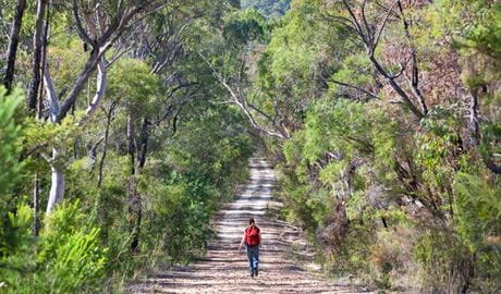 Dubbo Gully loop trail, Dharug National Park. Photo: Nick Cubbin
