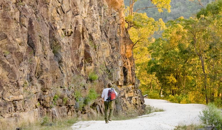 Old Great North Road Walking Track, Dharug National Park. Photo: Simone Cottrell/NSW Government
