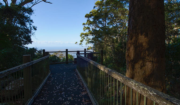 Rainforest Loop Lookout, Dooragan National Park. Photo: John Spencer/NSW Government