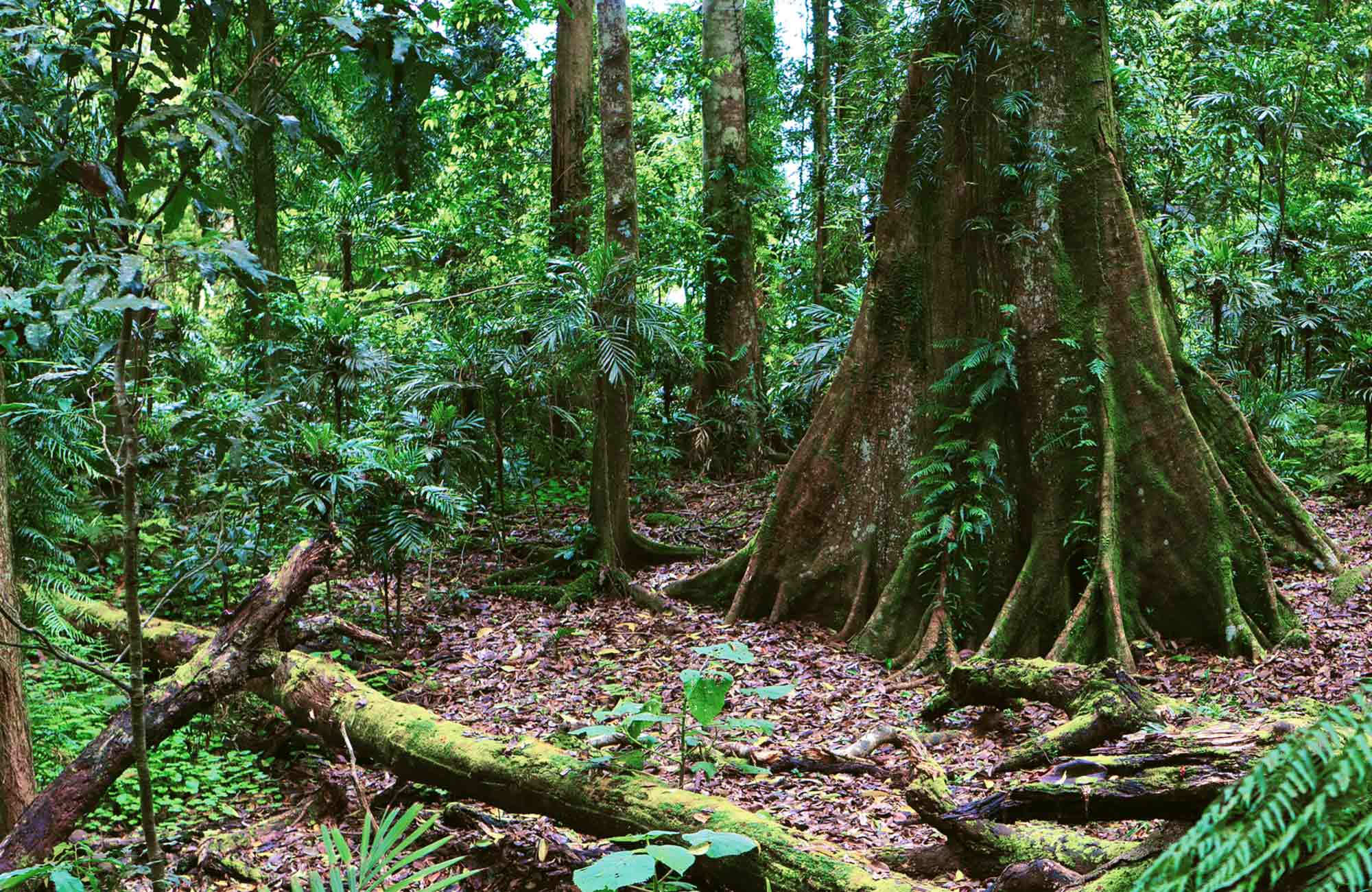 Rainforest setting. Photo:Rob Cleary