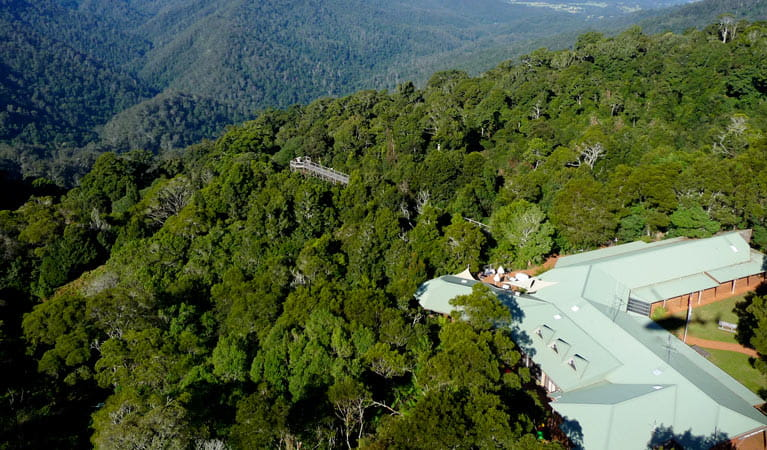 Dorrigo Rainforest Centre, Dorrigo National Park. Photo: NSW Government