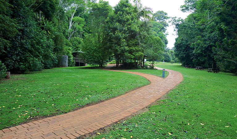 Path through the Glade picnic area. Photo: Rob Cleary
